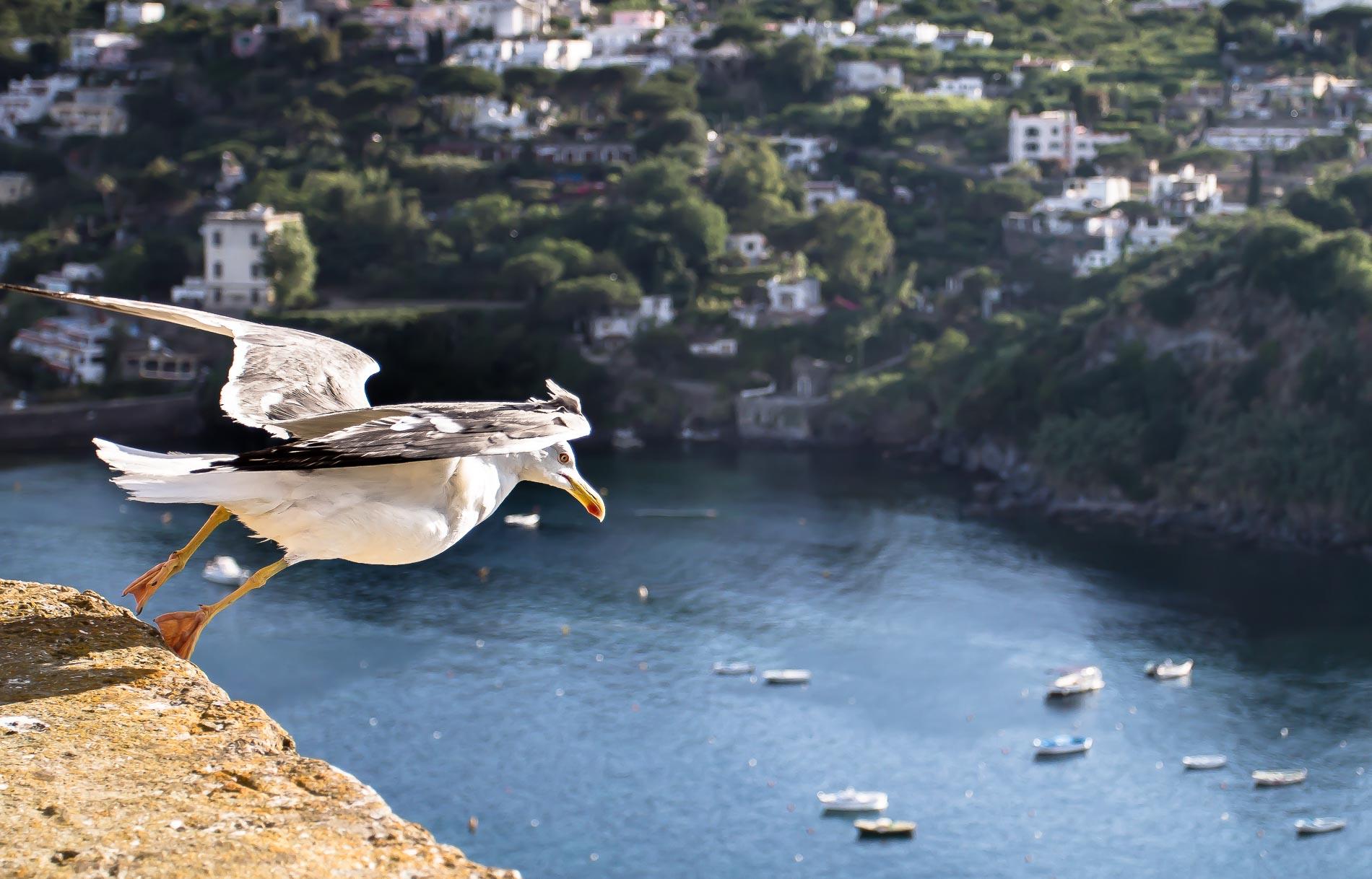 gabbiano che spicca il volo © Jack Celotti Photography