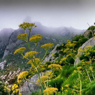 Monte Epomeo, vetta nella nebbia