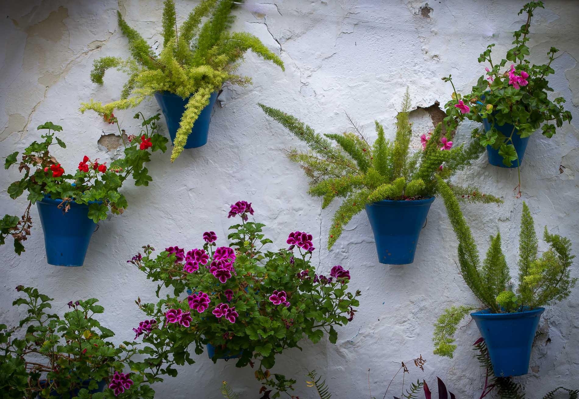 Cordoba, parete con vasi di fiori
