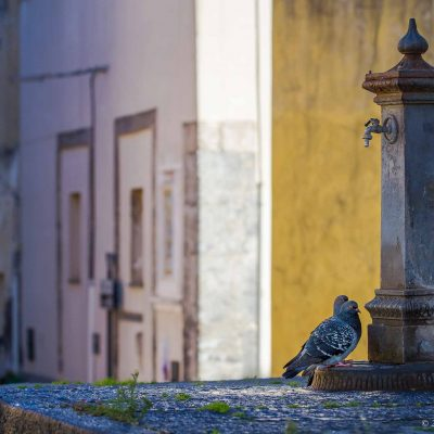 Procida, pigeons under the fountain