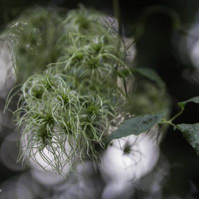 Germogli di autunno